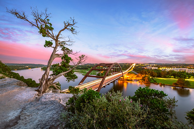 Tree, Pennybacker Bridge, Austin, Texas, America