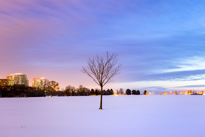 Lonely Tree, Veterans Park, Milwaukee, America