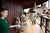 Giraffe Ctr-023