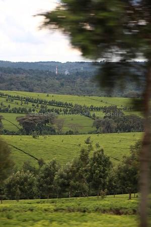 Kericho Tea fields-022