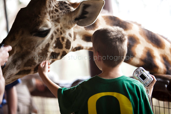 Giraffe Ctr-050