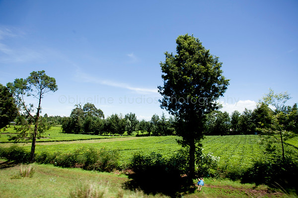 Kericho Tea fields-018