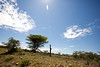 Masai Mara-053