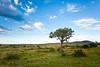 Masai Mara-031