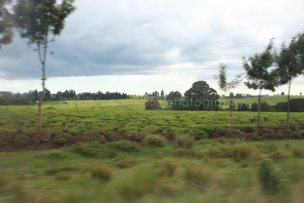 Kericho Tea fields-023