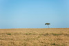 The following photos are on the plains of the great Masai Mara.