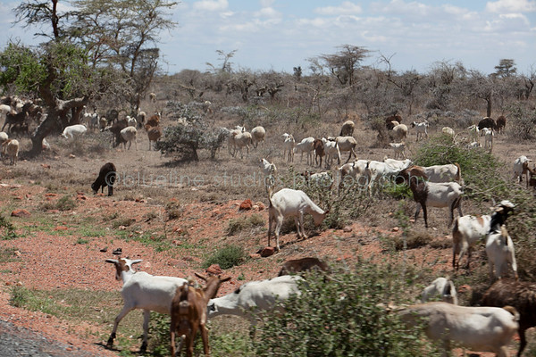 Masai Mara-059