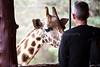 Giraffe Ctr-053