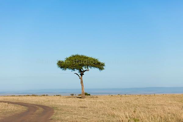 Masai Mara-005