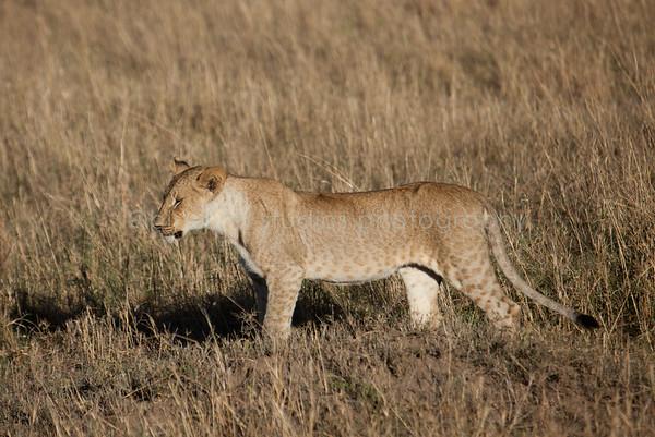Safari-106