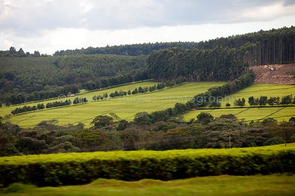 Kericho Tea fields-031