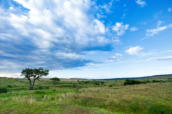 Masai Mara-030
