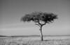 Masai Mara-009
