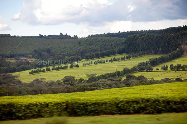 Kericho Tea fields-032