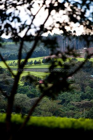 Kericho Tea fields-033