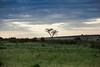 Masai Mara-010
