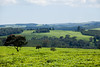 Kericho Tea fields-013