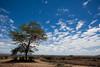 Masai Mara-044