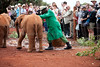 How to move a baby elephant!