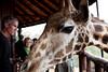 Giraffe Ctr-026