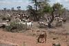 Masai Mara-060