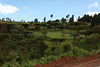 Kericho Tea fields-019