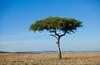 Masai Mara-008