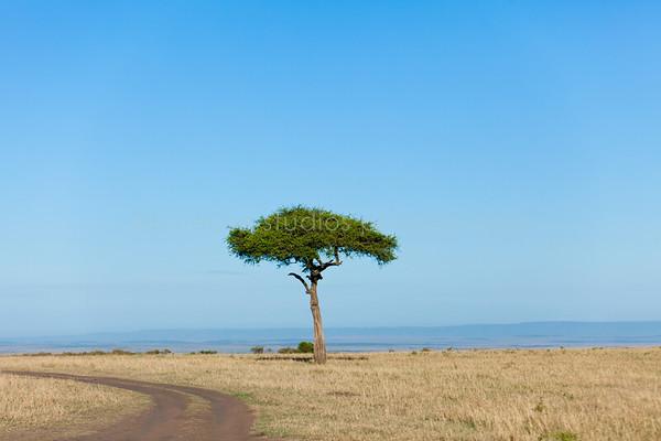 Masai Mara-003