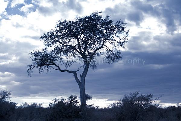 Masai Mara-013