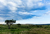 Masai Mara-028