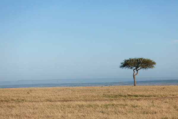 Masai Mara-007