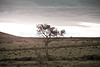 Masai Mara-046