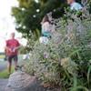 Piedmont_Summer-5037