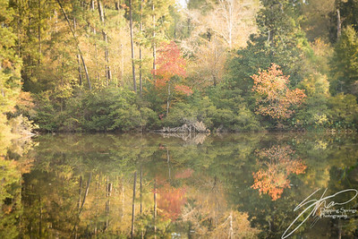 Pondscapes-6182