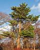 Autumn Trees in Largs Park