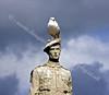 Memorial Gull