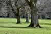 Balloch Castle Park - 19 March 2020