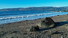 Lunderston Bay - 15 December 2017
