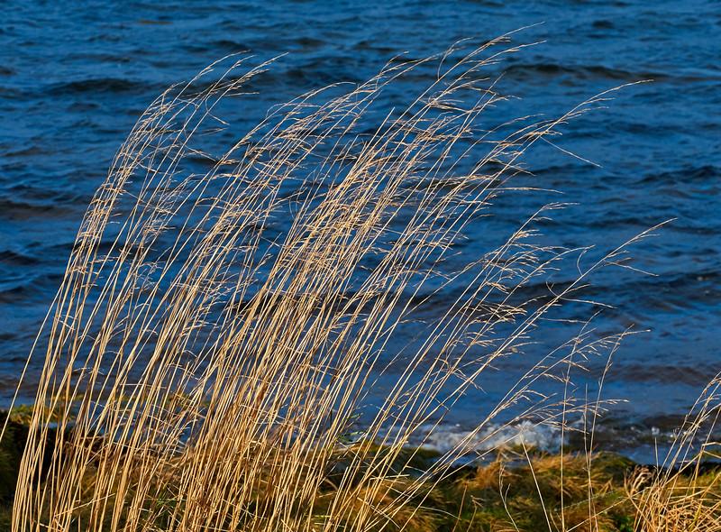 Lunderston Bay - 1 December 2016