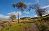 Abandoned Farm near Loch Thom - 12 April 2017