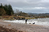 Dogs Enjoying the Water - Lunderston Bay - 1 January 2012