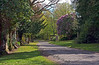 Greenock Cemetery View