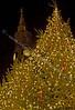 Christmas Lights - 2007
