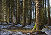 Trees at Loch Thom