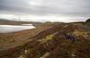 Greenock Hills and Reservoirs - 7 February 2013