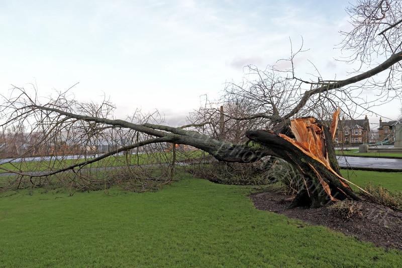 Well Park - Storm Damage - 7 January 2012