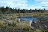Leapmoor Forest, Near Inverkip - 27 February 2018
