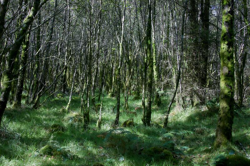 Camsail Forest Near Kilcreggan - 22 August 2020