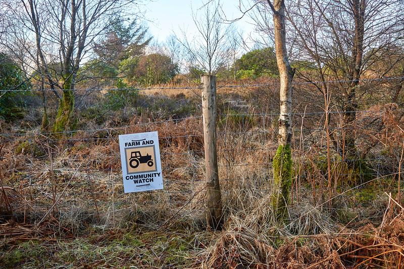 Camsail Forest Near Kilcreggan - 8 January 2019