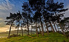 Trees at Knapps Loch Near Kilmacolm - 16 October 2013